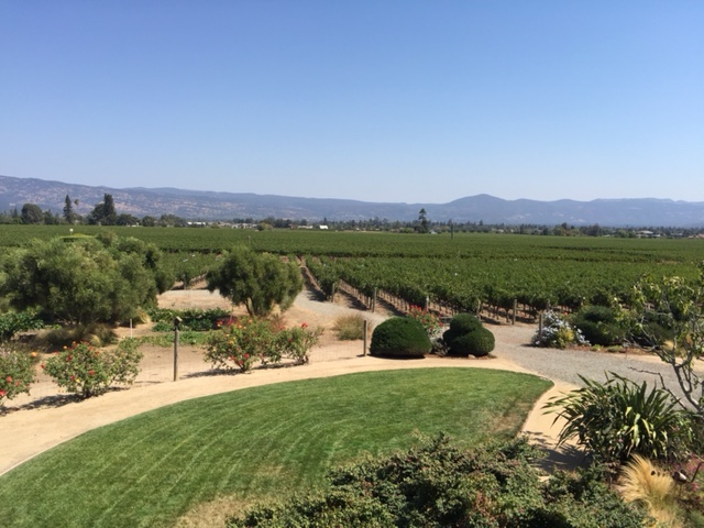 Napa Vineyard Photo - Link to Photo Gallery